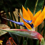 beauty_of_one_product_costarica